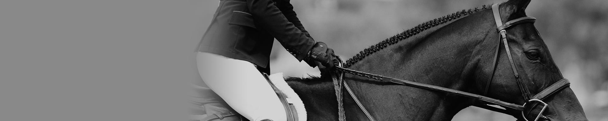 Equine Slider